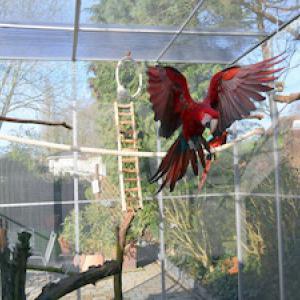 Zinkvergiftung bei Papageien ! Was ist zu beachten ?